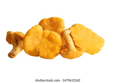 Chanterelles or golden chanterelle mushrooms isolated with clipping path