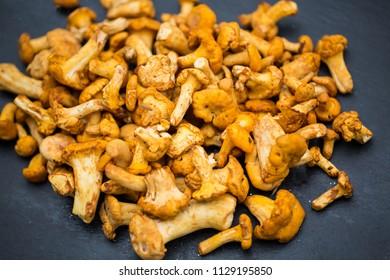 Chanterelles (mushrooms) on slate