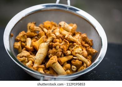 Chanterelles, mushrooms in the sieve