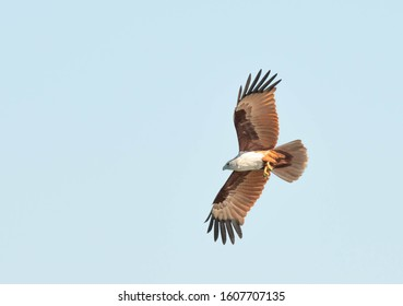 Chanthaburi , Thailand-04 January 2020 Red backed sea eagle  flying over the sea.