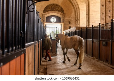 CHANTILLY, FRANCE  - APRIL 2, 2018: A horse in the Grand Stable of the Chantilly Castle in France