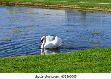 Chantilly, France - august 14 2016 : swan in thepark of the castle of Chantilly