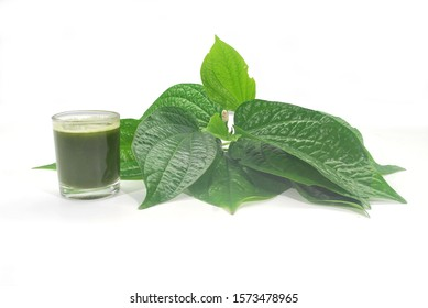 Chaplo leaves on white background.Helps to nourish the element, relieve the symptoms of flatulence. And helps to expectorate.