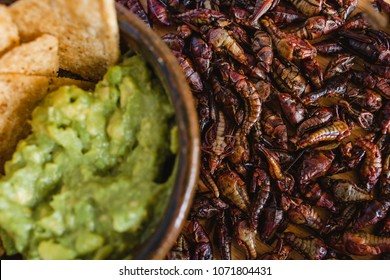 Chapulines, grasshoppers and guacamole snack traditional Mexican cuisine from Oaxaca
