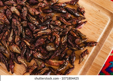 Chapulines, grasshoppers snack traditional Mexican cuisine from Oaxaca mexico