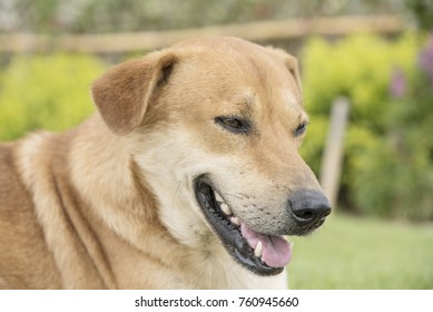 Character of a brown dog in a lawn on a wallpaper background.