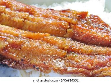 charcoal broiled eel,tasty japanese food