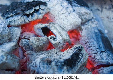 Charcoal in the process of combustion