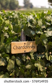 Chardonnay Sign
