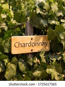 A Chardonnay Sign in a Vineyard.