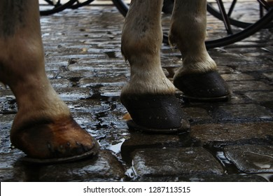 Chariot-horse hooves in Vienna