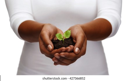charity, environment, ecology, agriculture and nature concept - closeup of african american woman hands holding plant in soil