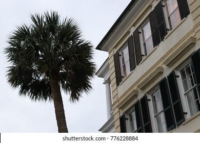 Charleston Battery House with Palm Tree