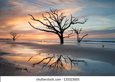 Charleston Botany Bay Boneyard Beach Edisto Island Tree in Surf