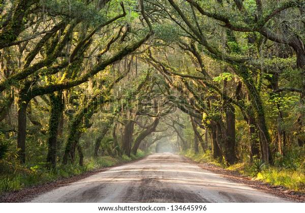 Charleston Botany Bay Road Edisto Island Lowcountry South Carolina