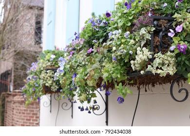 Charleston Flower Box
