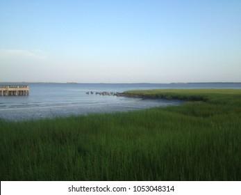 Charleston, South Carolina lowcountry marsh