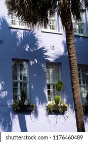 "CHARLESTON, South Carolina/U.S.A. - JULY 29, 2018: A photo of a palm tree with window boxes on a lavender house on Bay Street's Georgian-style ""Rainbow Row"" of houses."