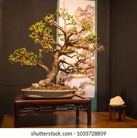 CHARLOTTE, NC - February 23, 2018: The Japanese art of Bonsai tree shaping on display at the Southern Spring Home & Garden Show.