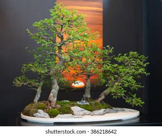 CHARLOTTE, NC --  February 28, 2016:  A display of the Japanese art of bonsai at the Southern Spring Home & Garden Show.