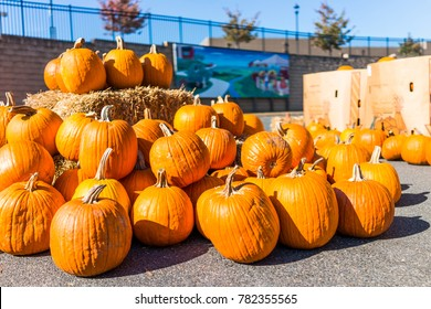 Charlottesville, USA - October 20, 2017: Pile of many large orange pumpkins with hay on Whole Foods Market parking area in autumn or fall season