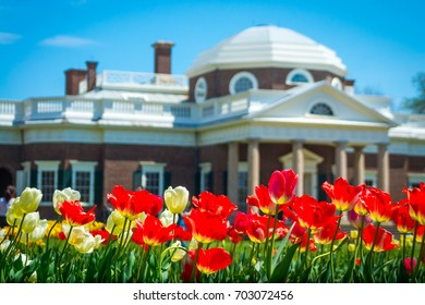 Charlottesville, Virginia - April 20, 2014: Focus on a row of red and white tulips, with the majestic dome and columns of Thomas Jefferson's Monticello in the distance.