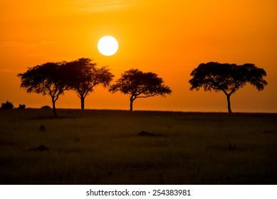 Charming African morning in Murchison Falls National Park, Uganda