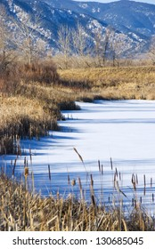 Charming detail of the edge of a frozen pond in a wildlife refuge area on the Colorado prairie