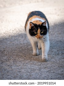 Charming female stray cat, close-up photo of three colors car