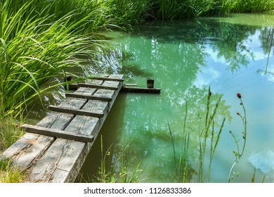 Charming garden pond. Small natural garden lake with wooden walkway.