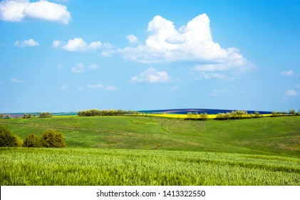 Charming landscape with a strip of yellow rape in the middle of a green wheat field against a background of cloudy sky