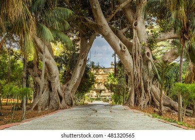 charming pathway through two big ficus trees, surrounded by lush flowers and plants, San Anton Gardens also known as the President's Gardens, in Attard, Malta, Europe.