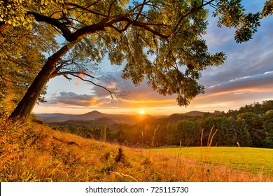Charming sunset over the solitaire trees in the national park Bohemian Switzerland in the Czech Republic with strong clouds in the sky and high grass in front