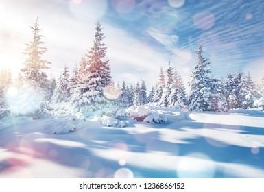 Charming winter landscape in the morning. Location Carpathian, Ukraine, Europe. Bokeh light effect. Instagram toning filter. Ski resort. Exotic wintry scene. Fabulous winter wallpaper. Happy New Year!