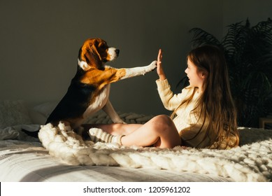 Charming young girl lying on sofa, looking at beagle dog and gives high five. Smiling cute child resting with puppy in sunny morning room.