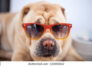 Charpei dog glasses