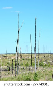 Charred tree trunks, standing among the steppe plain, formed after by catastrophic forest fires. Steppe plain formed in substitution of the pine forest after vast fire at far environs of Voronezh city