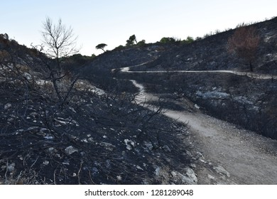 Charred vegetation, aftermath of wildfire, Algarve Southern Portugal Europe.