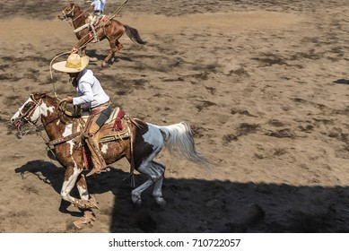 charro on horseback with lair to catch a wild bull in the country side