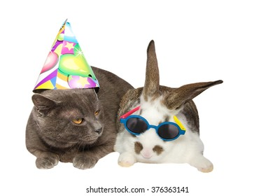 Chartreux cat and a baby bunny in festive accessories resting on a white background.