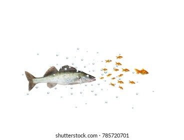 chasing the shoal of fish predator with bubbles on white background