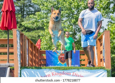 Chattanooga, TN / USA -200620: Southern Kingdom Diving Dogs