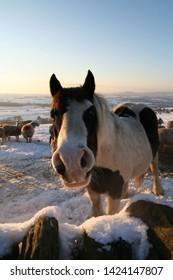 Chatty Horse in rural winter scene.