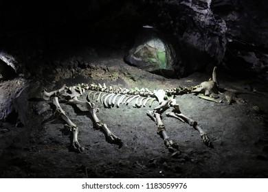 CHATYR-DAG, REPUBLIC OF CRIMEA / RUSSIA - SEPTEMBER 15 2018: European bison skeleton at Emine-bair-hosar (Mammoth's) cave, at the lower plateau of Chatyr-Dag, near Alushta