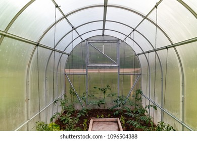 Cheap polycarbonate greenhouse in spring from inside