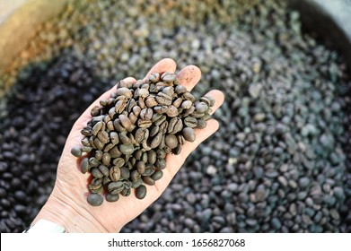Check the quality of the roasted coffee beans stored for long until old and inferior quality. Unclean coffee beans in the hands of Asian women