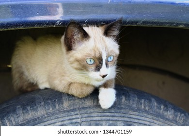 Check your car for cats and wild animals before start driving. Animal safety concept. Small cute grey kitten with green blue eyes, white paws and dark ears sitting lying on a car wheel under fender.