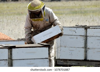 Checking the beehives that will be sold to other beekeepers.