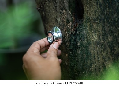 Checking health tree by stethoscope in the forest concept of global warming