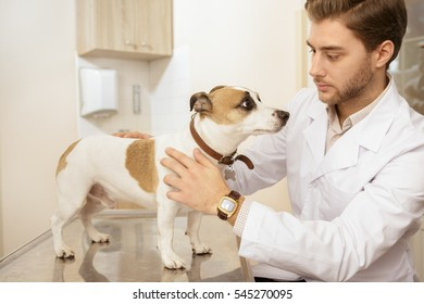 Checking on this little guy. Shot of a handsome male vet petting cute jack russel terrier at the vet clinic healthcare medicine industry hospital clinic health pet animal canine puppy concept